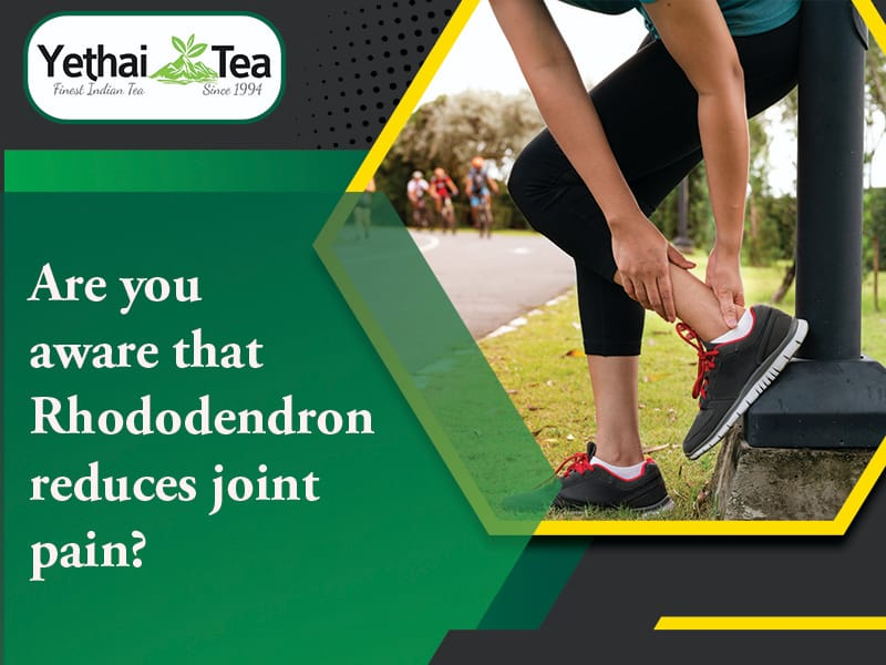 Are you aware that Rhododendron reduces joint pain?