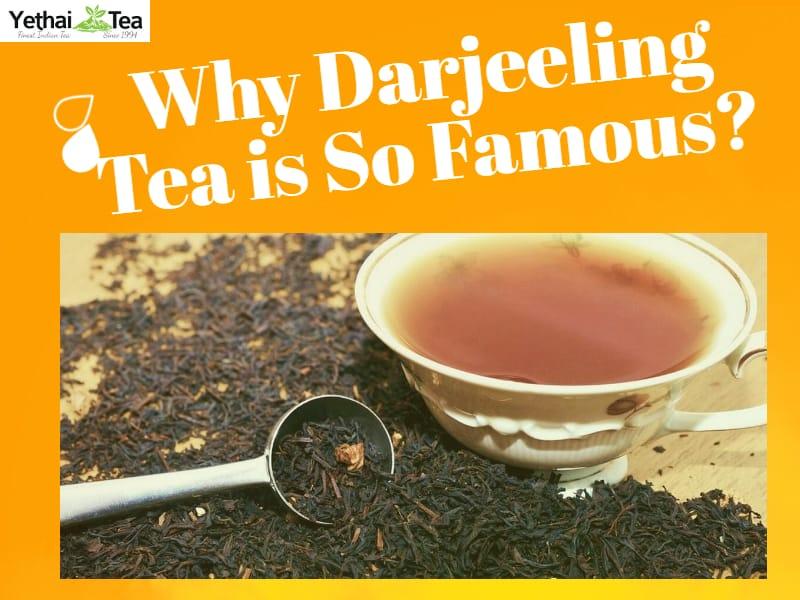 Why is Darjeeling Tea so famous?