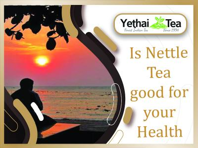 Is Nettle Tea good for your Health?